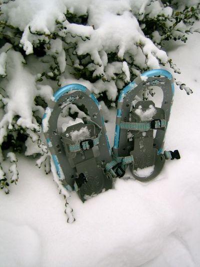 Snowshoe2
