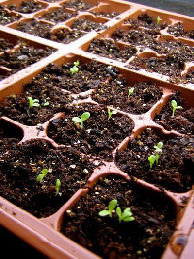 Babyplantsleeping
