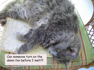 Captionedcat