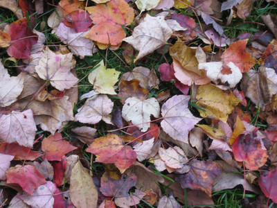 Foliage11