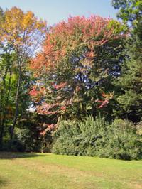 Foliage4_1