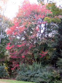 Foliage6