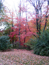 Foliage9