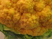 Orangecauliflower