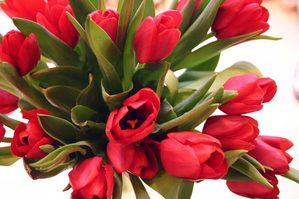 Tulips009